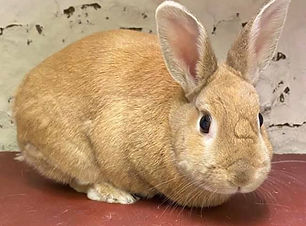 Small Pets Rabbit