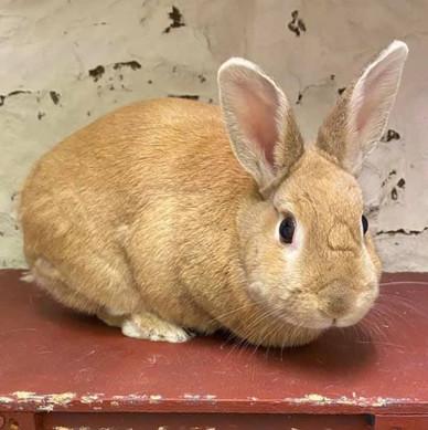 Small Pets Rabbit