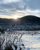 Domaine Bernard Haas - Vigneto in inverno e vista su Kaysersberg