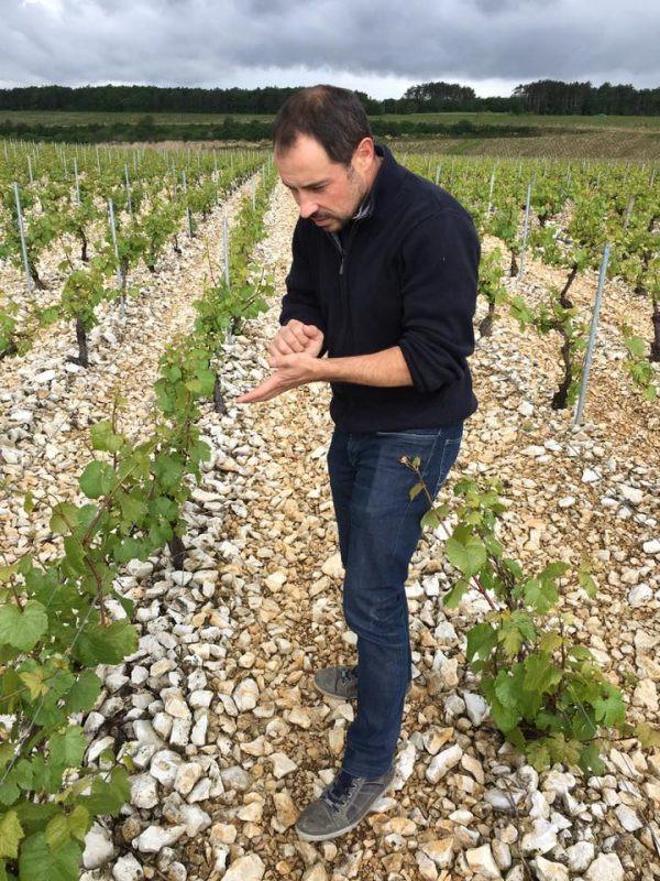 Sébastien Christophe Domaine Christophe vigne di Chardonnay vino Chablis