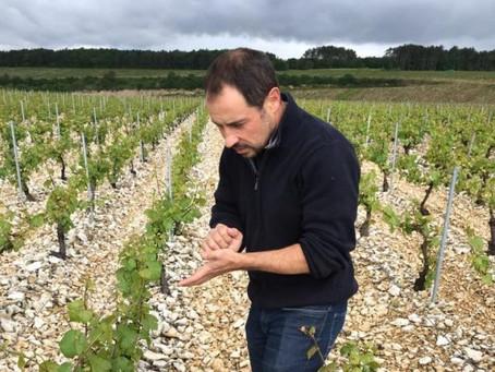 Domaine Christophe et Fils, nuovo produttore dalle diverse espressioni di Chablis