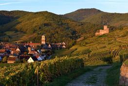 Domaine Bernard Haas - Vigneti al tramonto in Alsazia