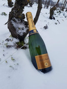 Champagne Huiban Paul Augustine in vigna