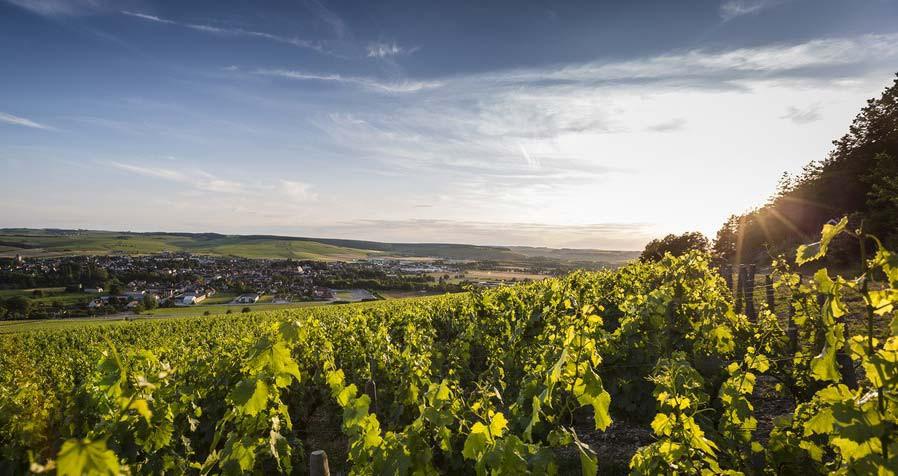 Vista sulle vigne del territorio di Chablis