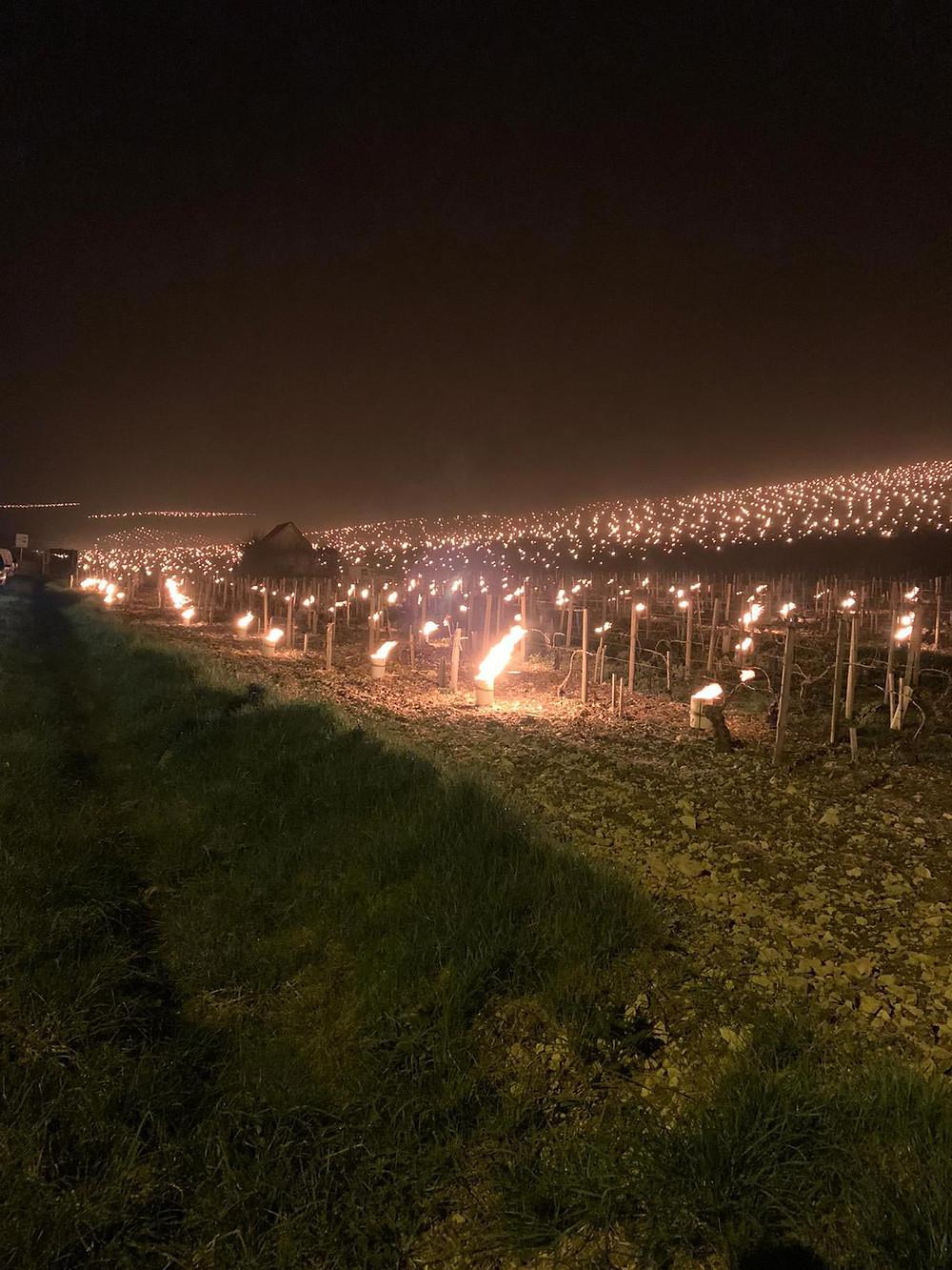 Le vigne di Chardonnay nella zona destra di Chablis, Domaine Christophe et Fils