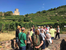 Domaine Bernard Haas - Visite guidate in Alsazia