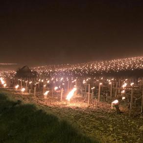 Foto-Reportage in vigna: gelate di primavera in Francia, le testimonianze dei produttori
