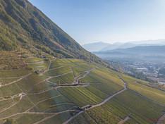 Domaine Jean Vullien - Savoia - vista dei vigneti rivolti alla montagna dall'alto