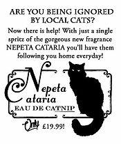 Nepeta Cateria The Dilettante Society