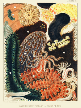Images from William Saville-Kent's The Great Barrier Reef of Australia (1893) The Dilettan