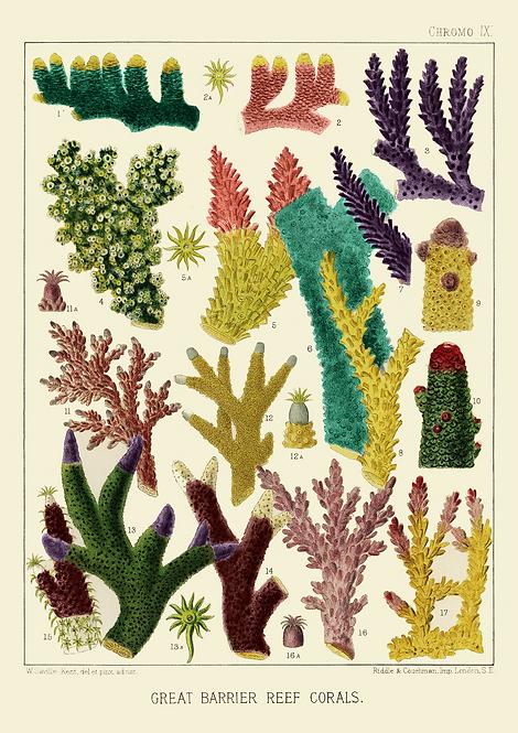 William Saville-Kent | Corals | A3 Art Print