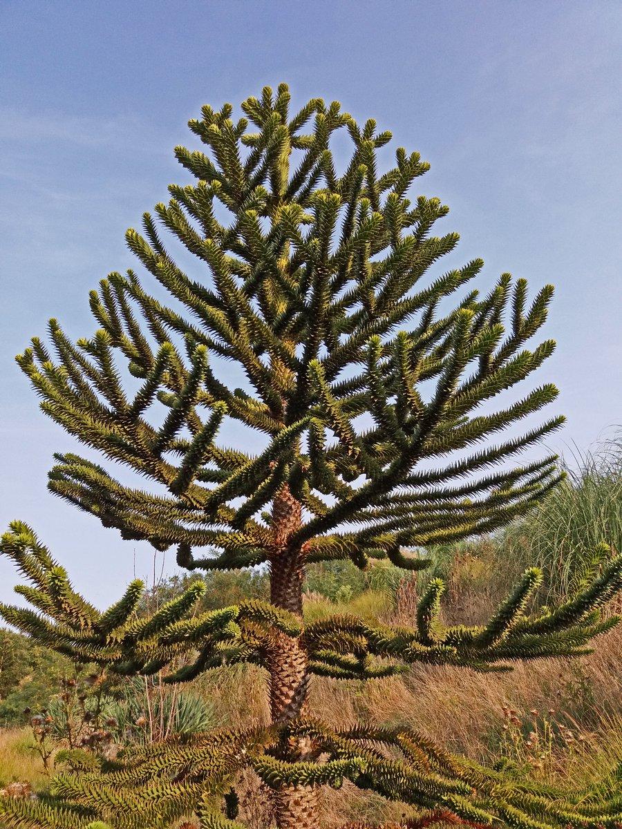 BS-arbre20170908_174131