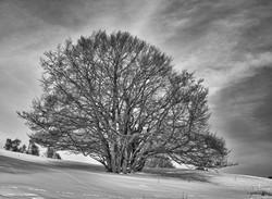 JLL_mon arbre