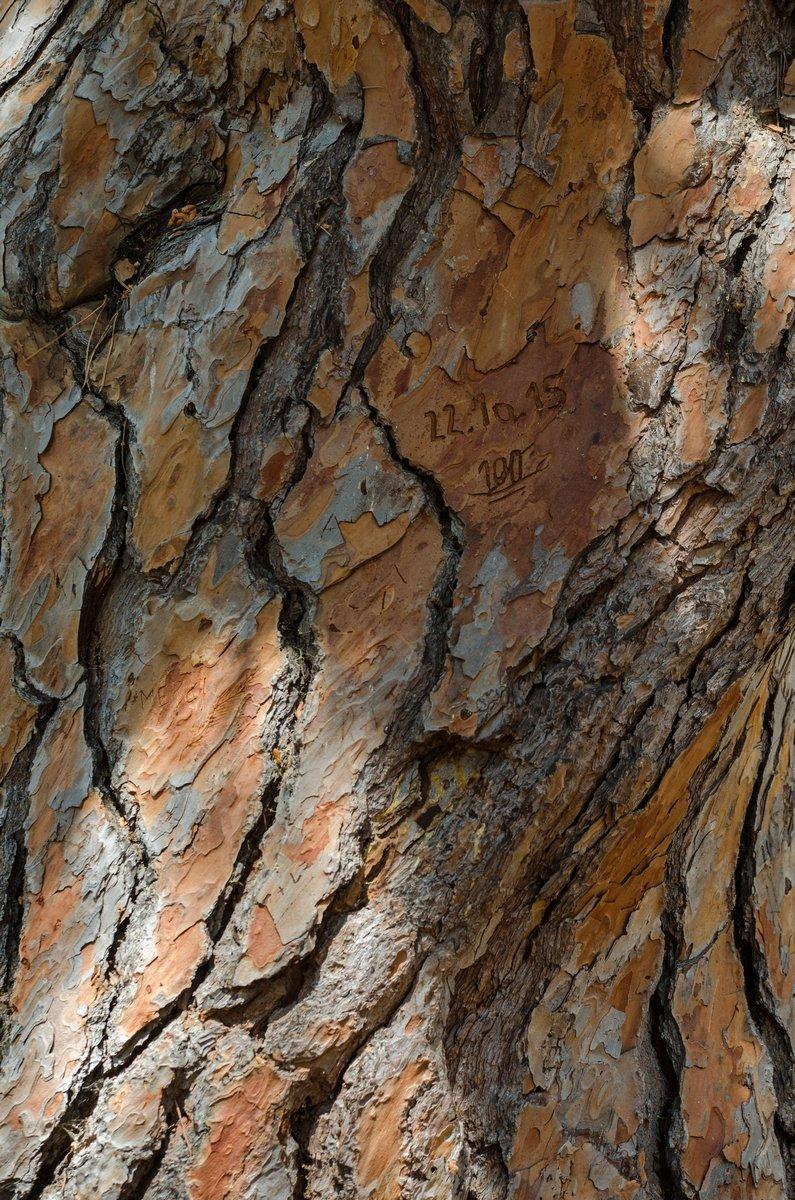 AlainF mon arbre-1