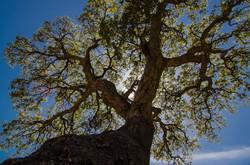 AlainF mon arbre-2