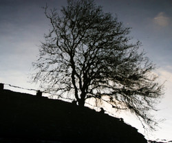 rcd_un arbre