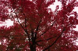 SL-arbre_4026-sl