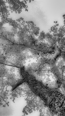 ID - arbre - 2