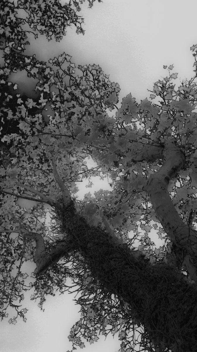ID - arbre - 1