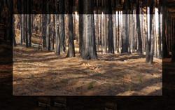 EBZ-P1580339-arbres 2