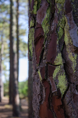 PA-arbre_2516