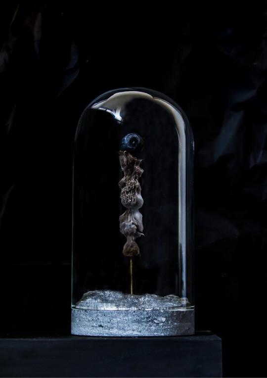 raw_finnish_dome_blueberry_winter___phot