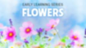 Flowers - Image