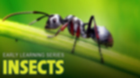 Insects - Image