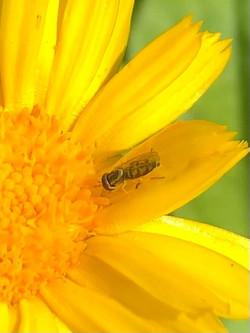Pollinator Week, June