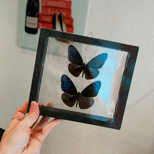 Butterfly frame boxes