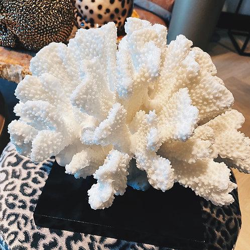 Coral white L