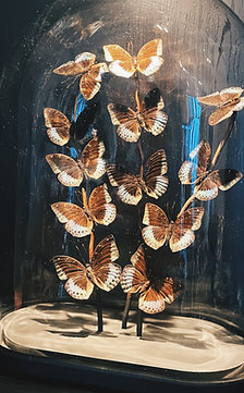 Butterfly glass XL