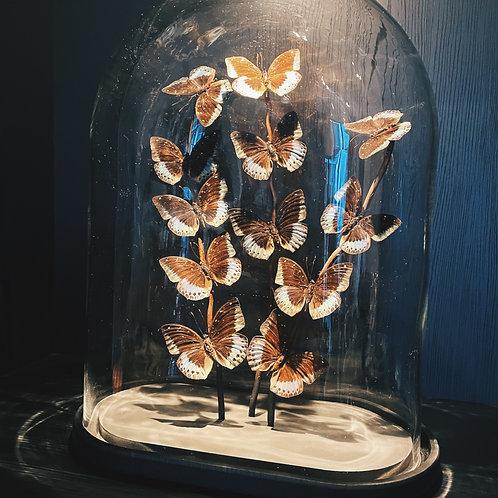 Butterfly glass XL
