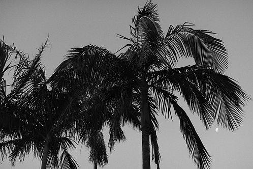 Palm Trees in Sydney, Digital Download