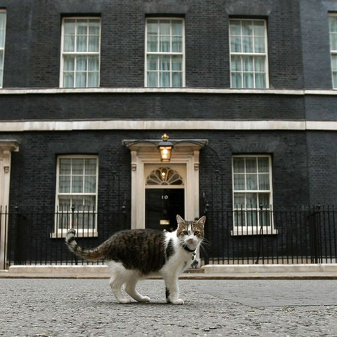 Essays from the Crypt: Downing Street Cat has Most Stable Job in Politics