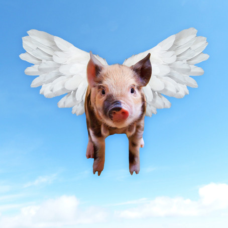 Pigs Fly Over Russia