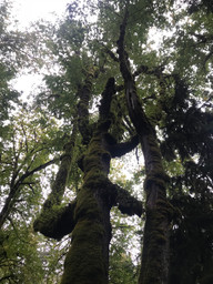 A Very Cool Tree