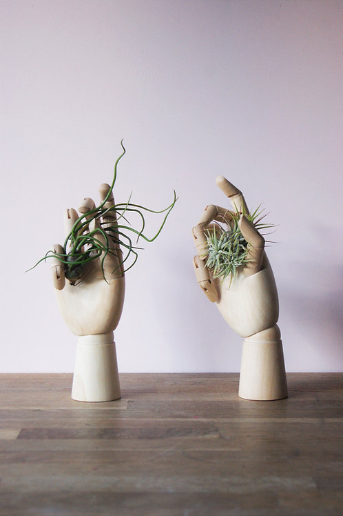 Tillandsia | Handy Air Plant