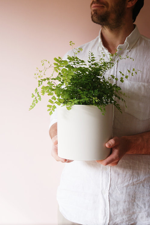 Adiantum | Maiden Hair & Mith Planter