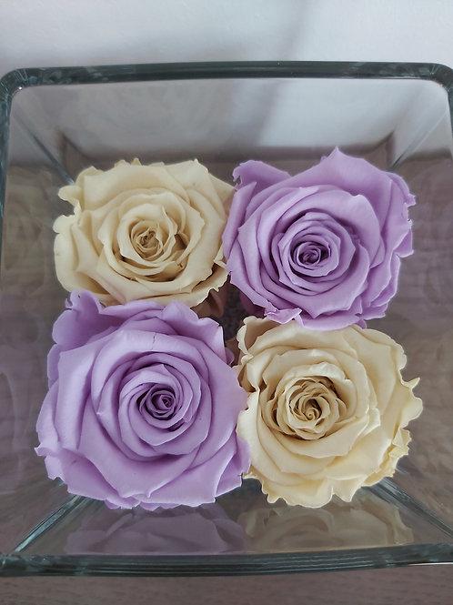 Royal Cube lll met 4 long life rozen gemixte kleuren