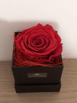 Royal rose in zwarte floxerbox bovenaanz