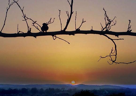 ציפור על ענף.jpg