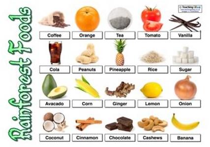 Images of foods from tropical rainforests: coffee, orange, tea, tomato, vanilla, cola, peanuts, pineapple, rice, sugar, avocado, corn, ginger, lemon, onion, coconut, cinnamon, chocolate, cashews, banana