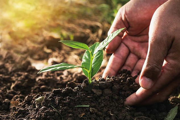 Regenerate soil shutterstock_755382610 (