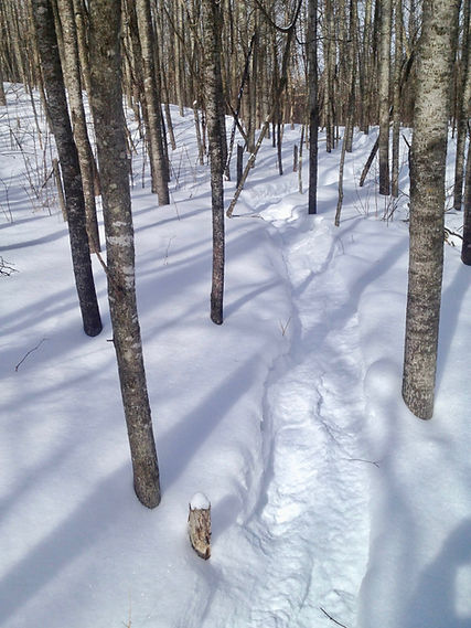Snowshoe trail on Brule River State Forest