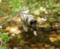 rocky+creek.jpg
