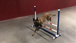 dare agility.png