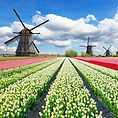 Dutch Delights EB.jpg