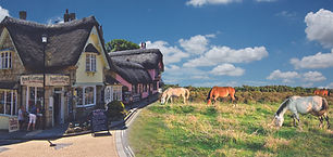 New Forest & Isle of Wight Montage.jpg