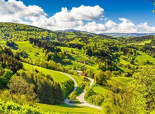 Black Forest web image.jpg